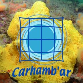 Participation au colloque CARHAMB'AR 2013