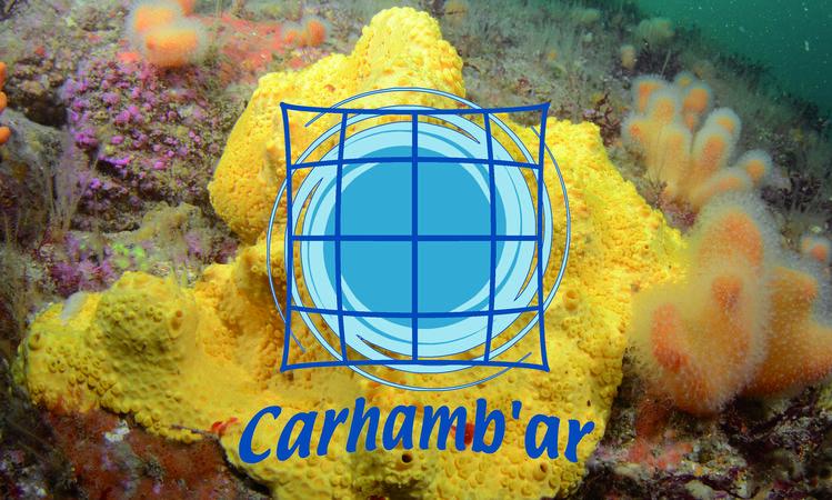 CARHAMBAR