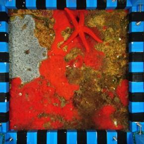Pourquoi suivre la colonisation des récifs artificiels par les organismes benthiques ?