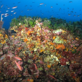 Les fonds coralligènes