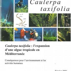 Caulerpa taxifolia : l'expansion d'une algue tropicale en Méditerranée