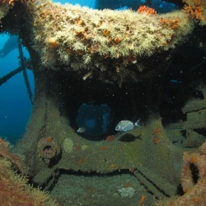 Les récifs du Prado : déjà 4 ans de suivi après immersion sur 6 catégories de modules