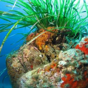 Le GIS Posidonie : beaucoup plus qu'une aventure humaine et scientifique