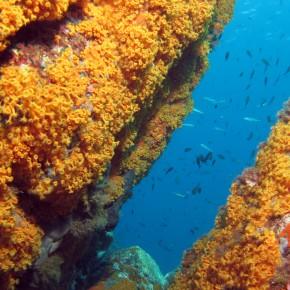 La cartographie sous-marine : des arpenteurs des mers à la révolution technologique