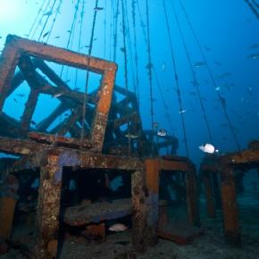 Les récifs artificiels et le GIS Posidonie : de l'observation des poissons à la conception du plus grand récif de Méditerranée