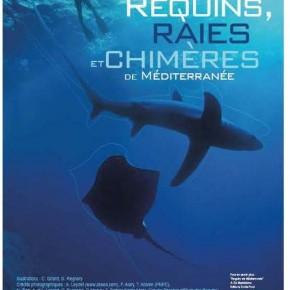 Exposition : Requin, raies et chimères de Méditerranée