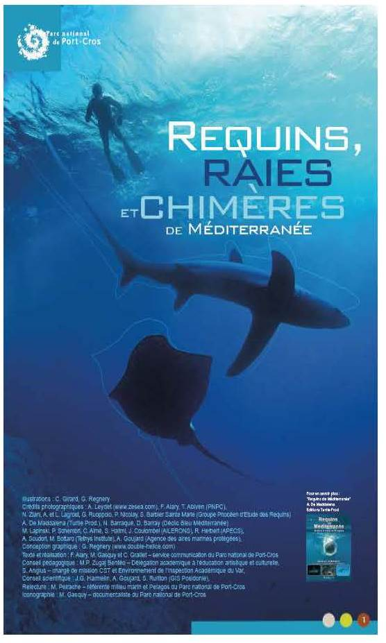 Expo requins 1-1