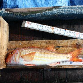 Suivi de l'effort de pêche professionnelle dans les eaux de Port-Cros (Parc national de Port-Cros, France)
