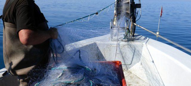 Pêches scientifiques dans le cadre du suivi de la réserve de Beauduc (Parc naturel régional de Camargue -France)