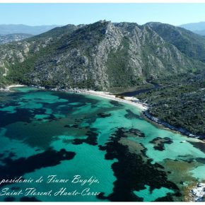 Des récifs de posidonie en Méditerranée française