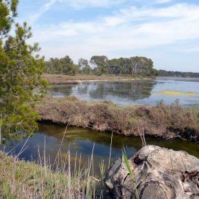 Etude et restauration des salins d'Hyères en tant que socio-écosystème lagunaire: vers une restauration de la continuité écologique et de la fonction de nurserie des salins - SALSA